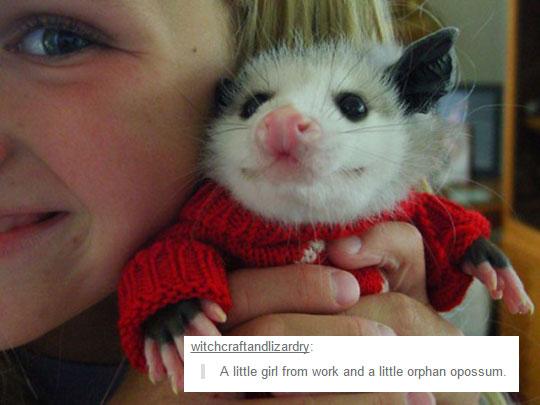cool-possum-costume-cute