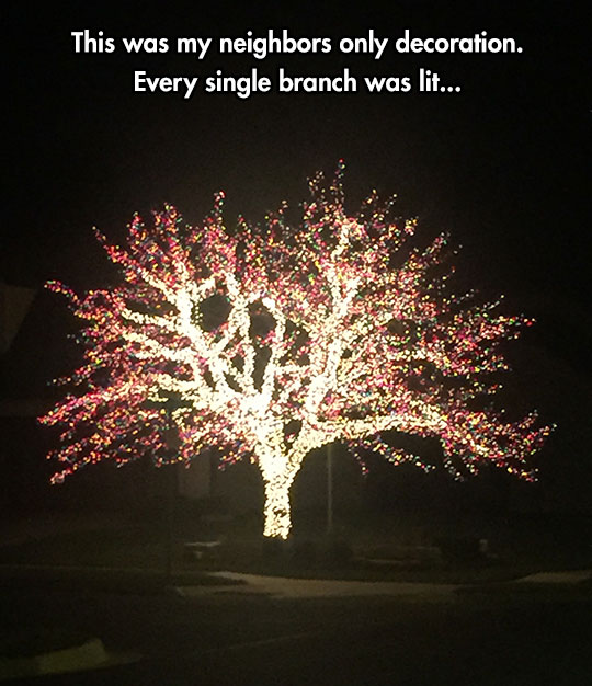 cool-tree-lights-branch