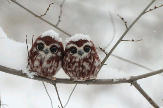 cute-baby-owls-tree-winter