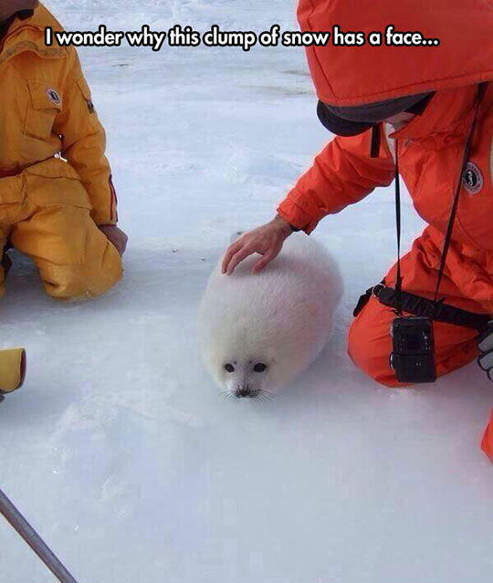 A Snowball With A Cute Face