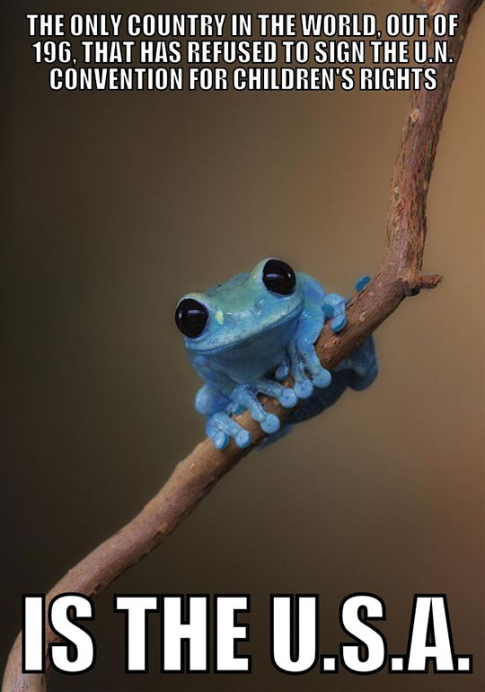 cute-blue-frog-USA-children-rights