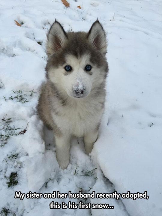 Cute Puppy Meets Winter