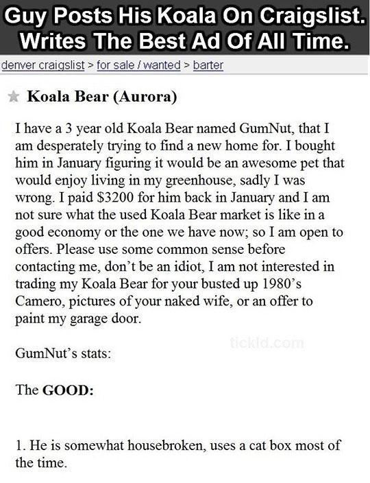 funny-Craigslist-ad-koala-bear