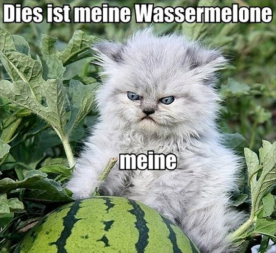 You Said It, German Cat