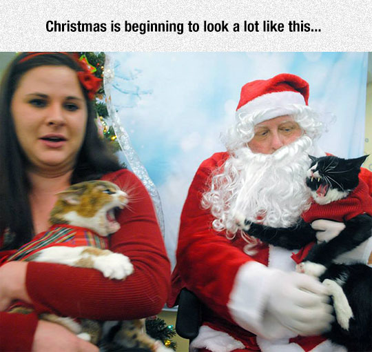 Cats During Christmas