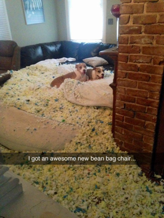funny-bean-bag-chair-dog-destroyed