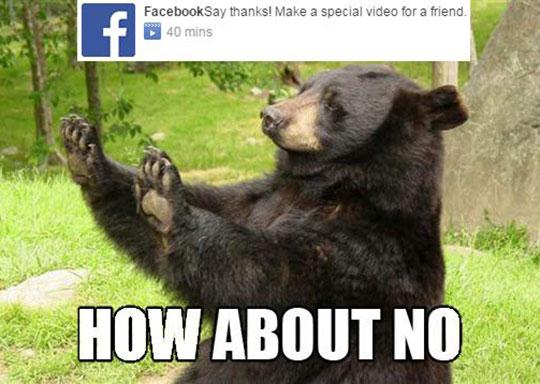 funny-bear-no-Facebook-friend-video
