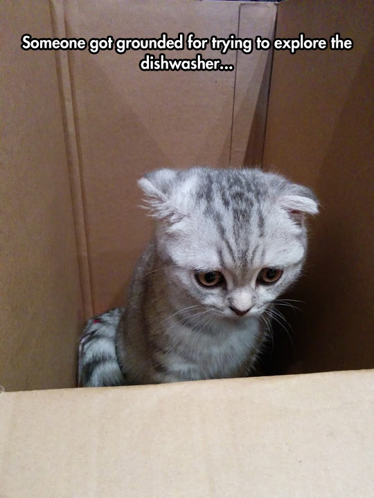 Grounded In A Box