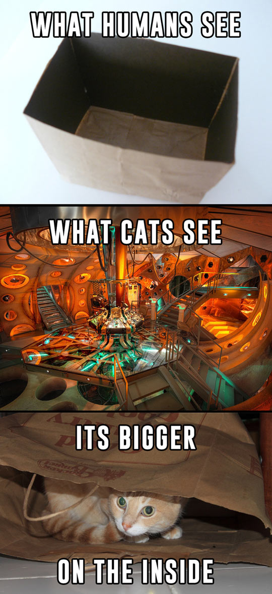 How Cats See The World