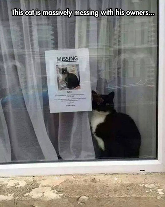 funny-cat-missing-sign-window