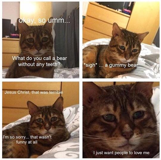 funny-cat-pun-terrible-shame