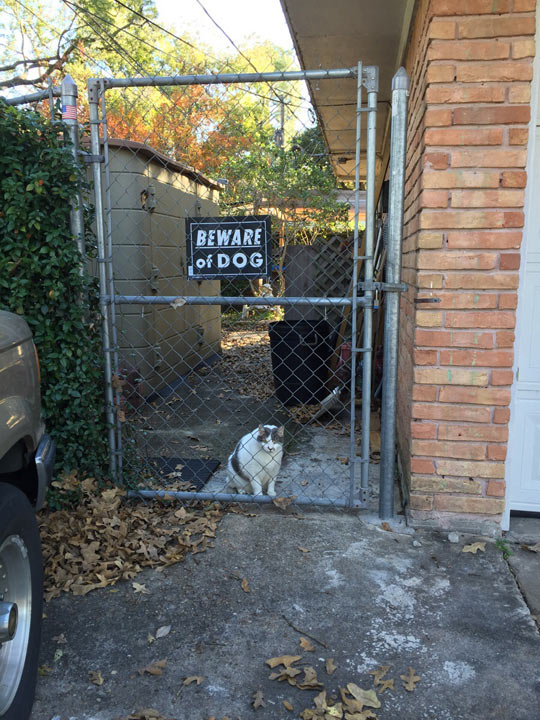 funny-cat-sign-beware-dog-house