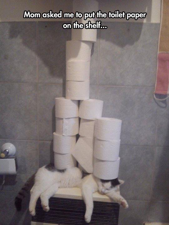 funny-cat-sleeping-bathroom-toilet-paper-pile