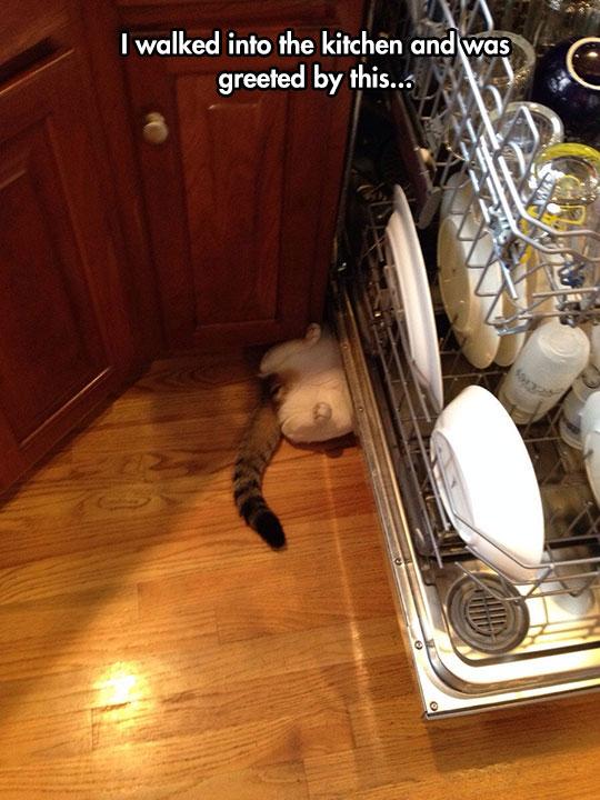 A Dishwasher Helper