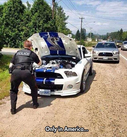 funny-cop-Mustang-taking-photo-cobra