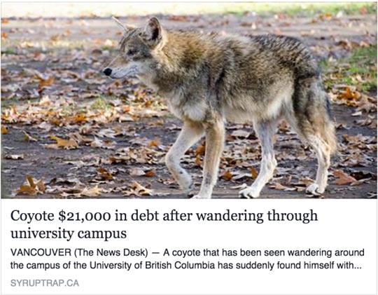 funny-coyote-university-campus-debt