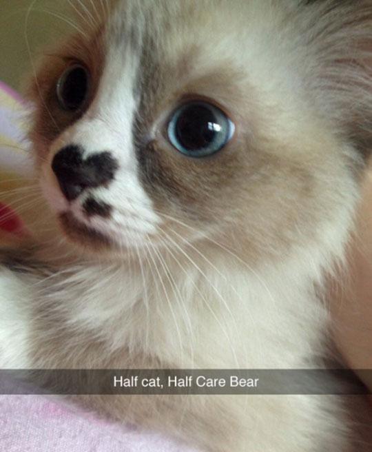 funny-cute-cat-heart-spot-nose