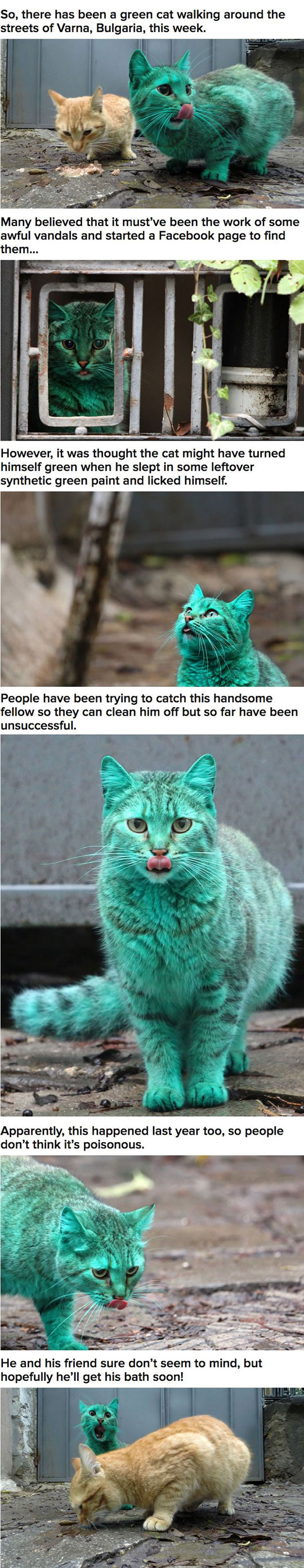 The Incredible Story Of The Turquoise Cat