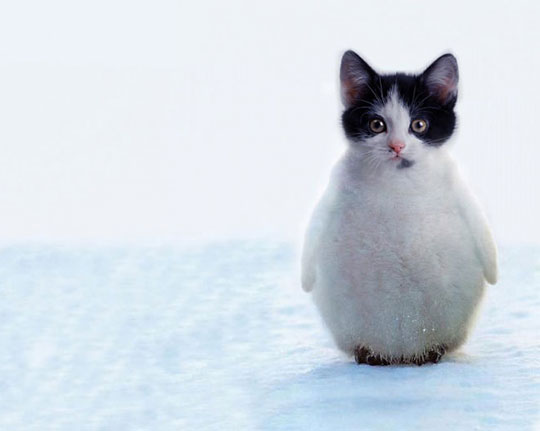 funny-cute-penguin-kitten-cat-snow