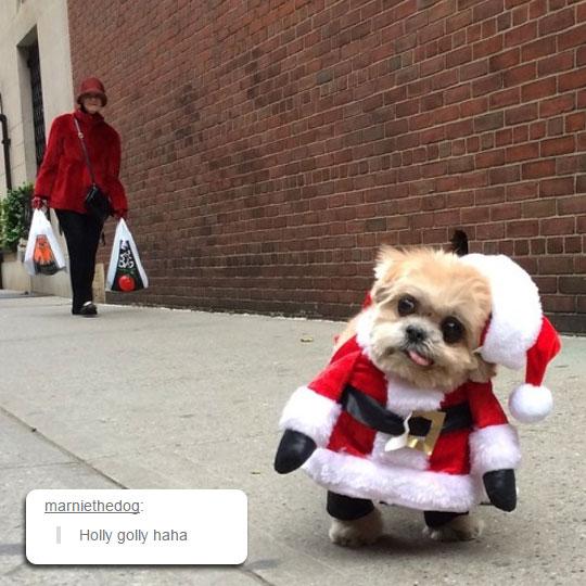 I Like This Santa