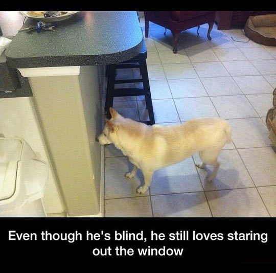 funny-dog-blind-staring-wall