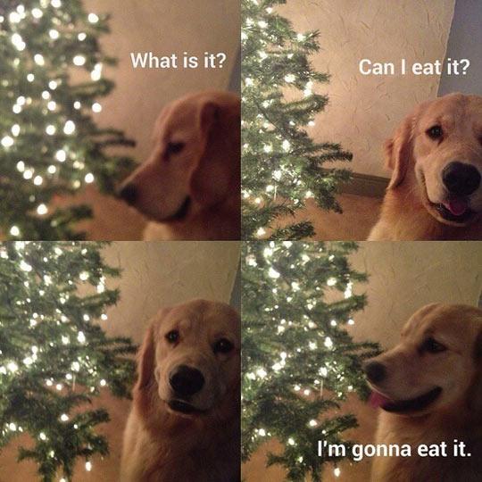 funny-dog-eat-Christmas-tree