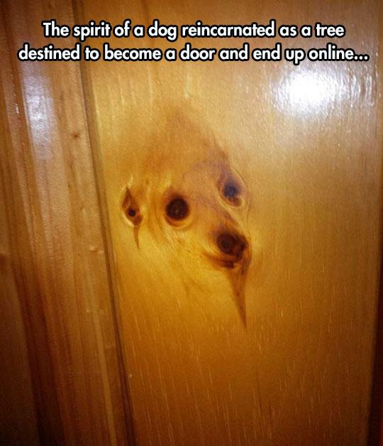 funny-dog-face-wood-door