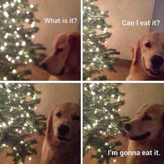 funny-dog-looking-Christmas-tree