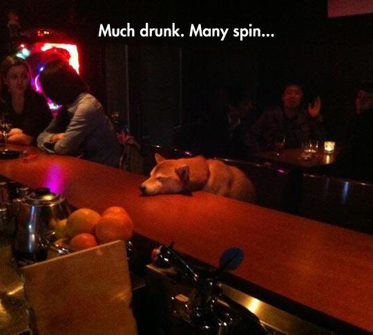 funny-doge-bar-sleeping-drunk