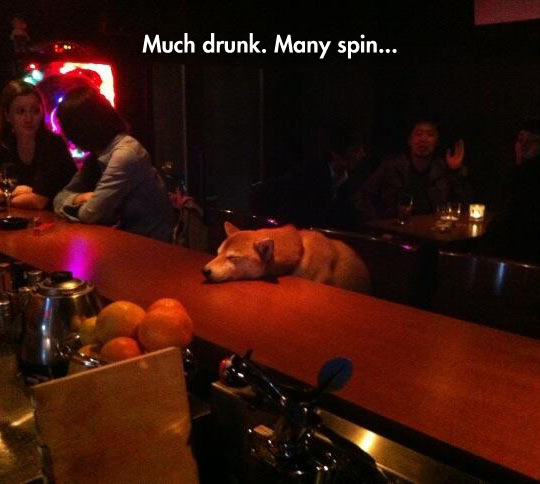 Ruff Night, Doge