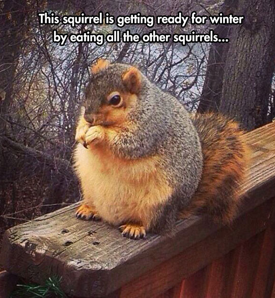 Getting Ready For Winter