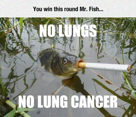 You Win This One Fish