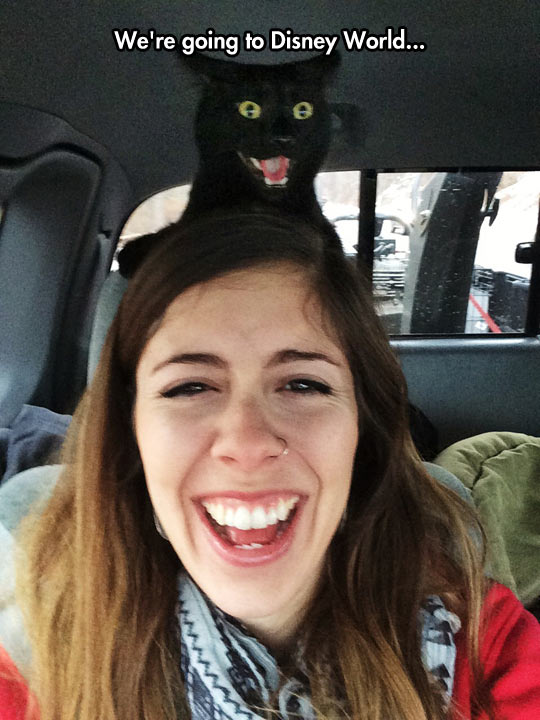 The Cat Is Thrilled About The Trip