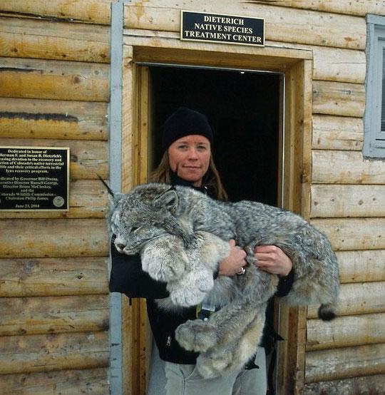 funny-girl-lynx-giant-cabin