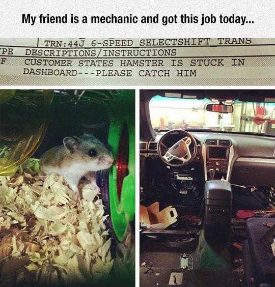 funny-hamster-car-dashboard-mechanic