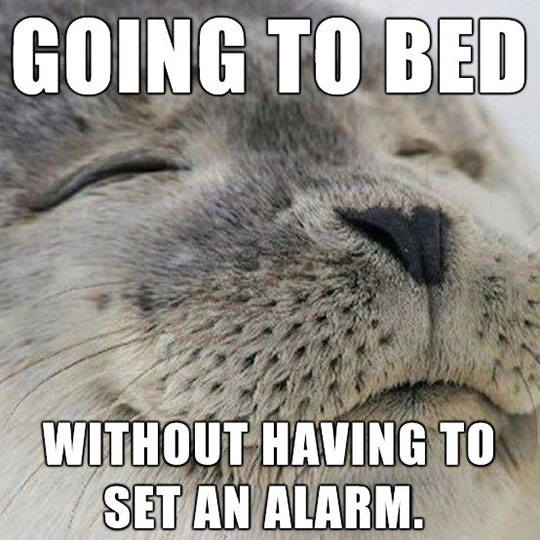 funny-happy-seal-smile-alarm