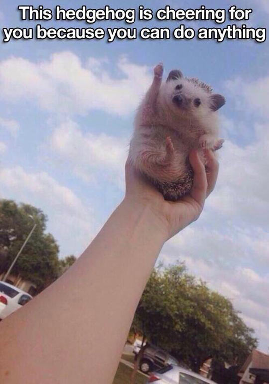 funny-hedgehog-cheering-hand-cute