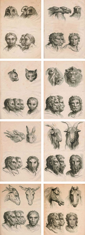 funny-human-owl-evolution-creatures-Sarah-Jessica-Parker