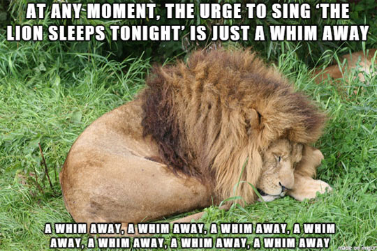 funny-lion-sleeps-song-stick-head