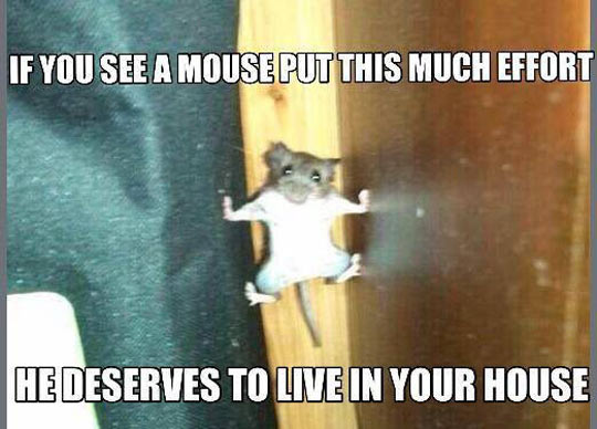 funny-mouse-climbing-effort-house