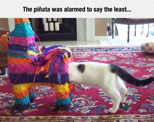 Exploring A Piñata, The Cat Way