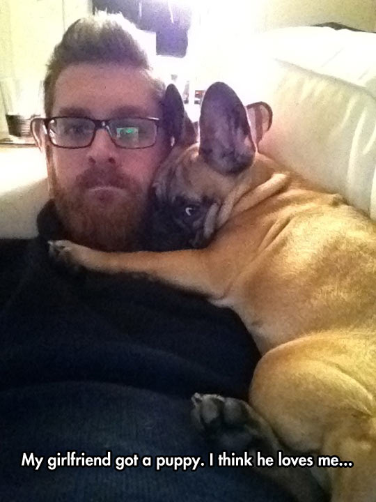 funny-puppy-hug-couch-love