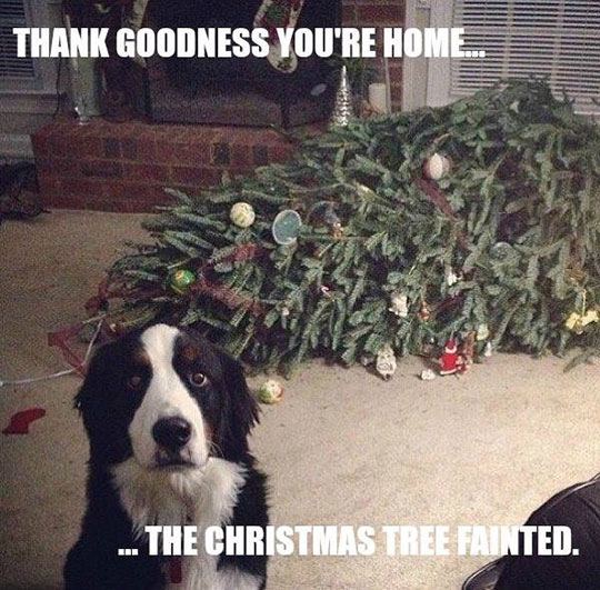 funny-sad-dog-Christmas-tree-floor