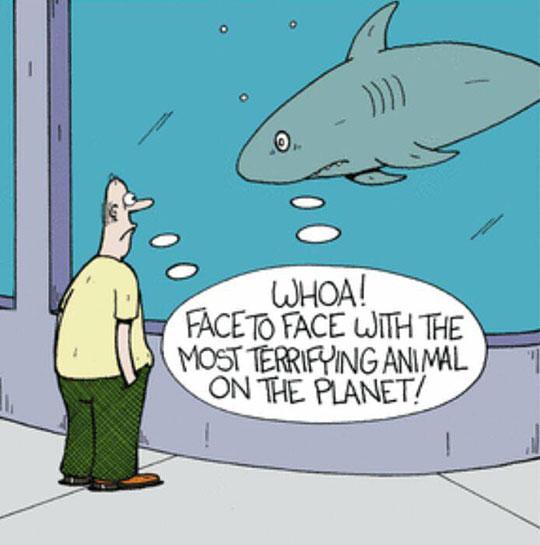 funny-shark-human-aquarium-terrifying