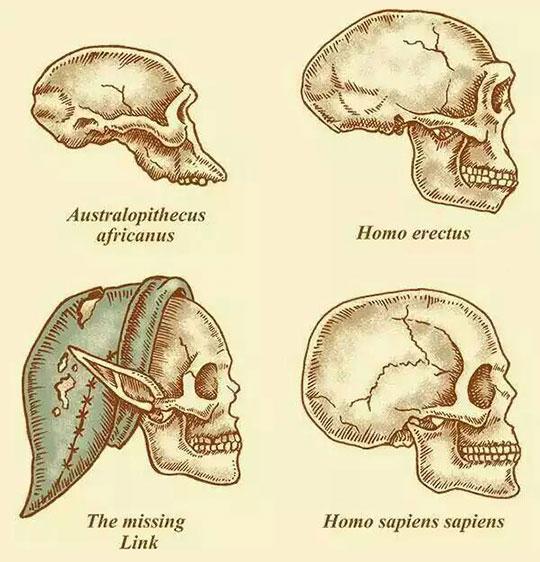 funny-skull-missing-Link-human