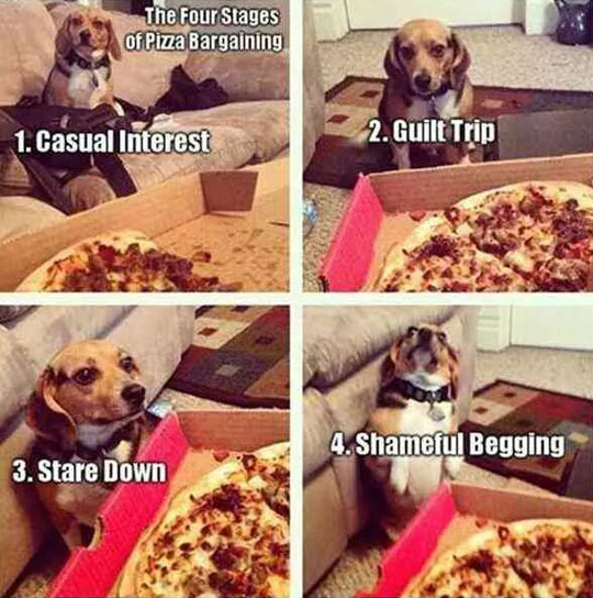 The Four Stages Of Begging For Pizza