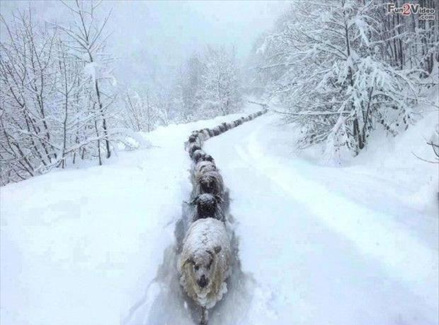 funny-winter-pictures-20