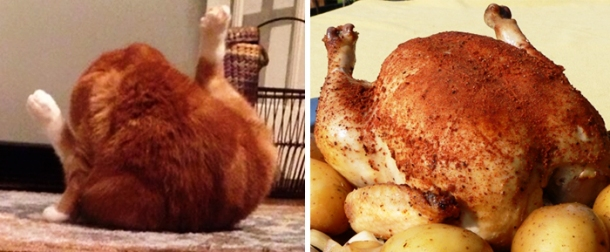 viralhen.com-cat-looks-like-other-thing-lookalikes-celebrities-7__700