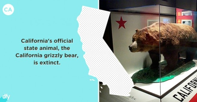 Embarrassing-State-Facts-05-685x356