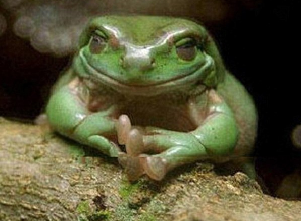 animals-who-are-up-to-something-toad-frog